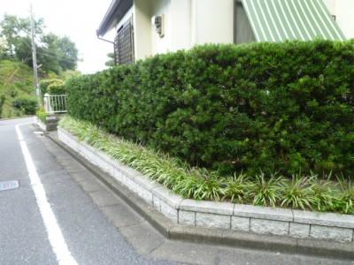 大野城市狭小花壇スペース植栽08