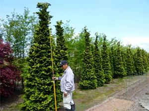 庭木販売(生垣・シンボルツリー)の流れ